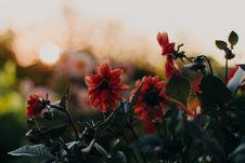 Free Orange Flowers Stock Image - 126195061
