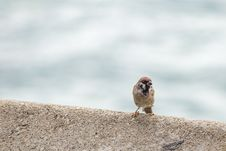 Free Brown Bird Perched On Surface Royalty Free Stock Images - 126195089