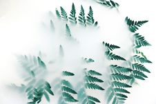 Free Green Leaf Plant Covered With White Smoke Royalty Free Stock Photography - 126195117