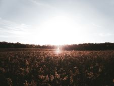 Free Silhouette Photography Of Grass Field Stock Photos - 126195433