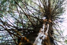 Free Low Angle Photography Of Brown Tree Stock Photos - 126195533