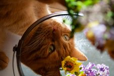 Free Close-up Photography Of Orange Tabby Cat Stock Photography - 126195762