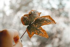 Free Close-Up Photography Of Person Holding Autumn Leaf Royalty Free Stock Photography - 126195877