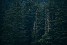 Free Green Forest Photo Royalty Free Stock Photography - 126195887