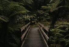 Free Brown Wooden Bridge Near Forest Royalty Free Stock Photos - 126196018