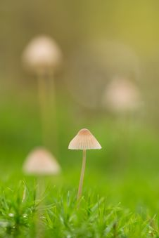 Free Selective Focus Of White Mushroom Royalty Free Stock Image - 126196086