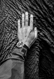 Free Grayscale Photo Of Arm Holding Elephant Skin. Stock Photos - 126196103