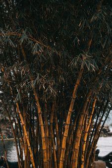 Free Bamboo Trees Royalty Free Stock Photo - 126196915