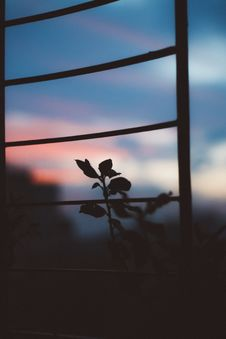Free Silhouette Photo Of Plant Stock Images - 126245394