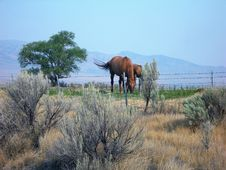 Free Two Brown Horses Near Trees Stock Photo - 126245590