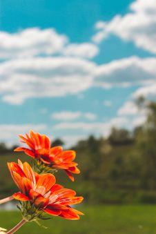 Free Shallow Focus Photo Of Orange Flowers Stock Image - 126245621