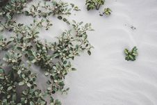 Free Photo Of Plants On Sand Stock Image - 126245821