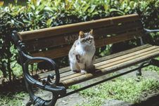 Free Photo Of White And Gray Cat Sitting On A Bench Stock Images - 126245864