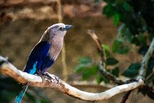 Free Blue And White Bird Perched On Brown Tree Twig Stock Photography - 126245872