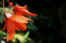 Free Orange Petaled Flowers Stock Photography - 126245982
