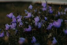 Free Selective Focus Photo Of Purple Petaled Flowers Royalty Free Stock Photography - 126246217