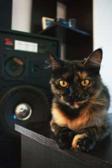 Free Black And Brown Cat On Black Tabletop Stock Photo - 126246280