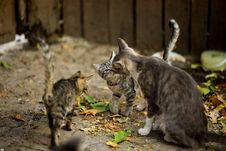 Free Three Silver Cats Stock Photo - 126246350