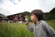 Free Boy Holding Dandelion Blowing Near Green Grass Field Stock Image - 126246411