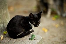 Free Black Cat Sitting On Gray Concrete Ledge Stock Photo - 126246470