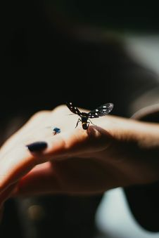 Free Selective Focus Photography Of Black Winged Insect Perched On Person S Pinky Finger Royalty Free Stock Images - 126404789