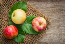Free Close-up Photo Of Red-and-yellow Apple Fruits On Green Leaves Royalty Free Stock Image - 126405016