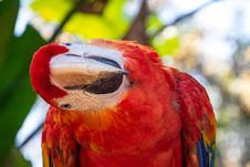 Free Selective Focus Photography Of Scarlet Macaw Stock Photography - 126543742