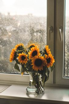 Free Yellow Sunflowers In Clear Glass Vase Stock Photography - 126543932
