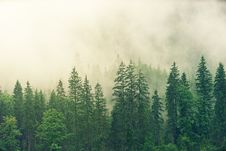 Free Forest Covered In White Fog Stock Image - 126652611