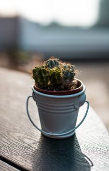 Free Closeup Photography Of Green Cactus Plant On Pail Stock Image - 126652791