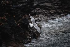 Free Close-UP Photography Of Flying Seagull Stock Photos - 126652823