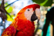 Free Selective Focus Photography Of Scarlet Macaw Stock Photo - 126652840