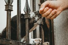 Free Dog Inside Wrought Iron Gate Smelling Person S Hand Close-up Photo Royalty Free Stock Image - 126727666