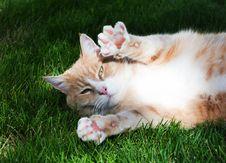 Free Orange Tabby Cat Lying On Grass Royalty Free Stock Photography - 126807867