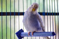 Free White Bird Perched On Cage Royalty Free Stock Photography - 126807967