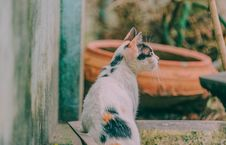 Free Calico Cat Beside Gray Wall Royalty Free Stock Photo - 126808185