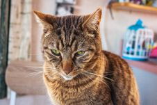 Free Brown Tabby Cat Sitting On Brown Surface Stock Photo - 126808230