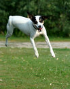 Free Jumpin  Jack Royalty Free Stock Images - 1273299