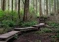 Free Rainforest Walkway Royalty Free Stock Photos - 1273458