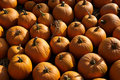 Free Pumpkin Patch Royalty Free Stock Photo - 1276935