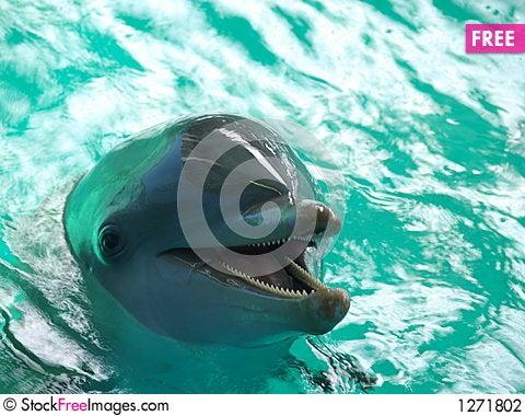 Free Bottlenose Dolphin Stock Photography - 1271802