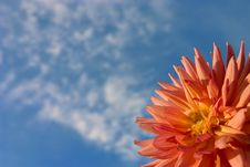 Free Dahlia On A Background Of The Blue Sky Royalty Free Stock Photography - 1270077