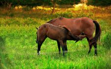 Free Horse Stock Photos - 1270763