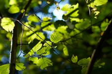 Free Leaves Stock Image - 1271011