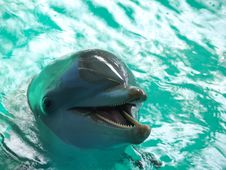 Free Bottlenose Dolphin Stock Photography - 1271802