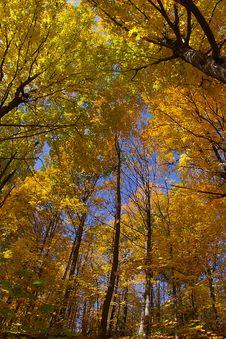 Free Fall Season Colors Royalty Free Stock Photos - 1273058