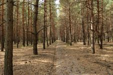 Free Cutting In A Forest Stock Photo - 1273560