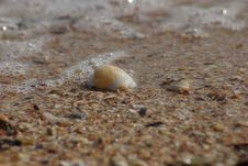 Free Shell Stock Images - 1273794