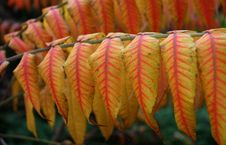 Red And Yellow Leaves Stock Photo