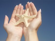 Free Starfish Gift Royalty Free Stock Photography - 1274217